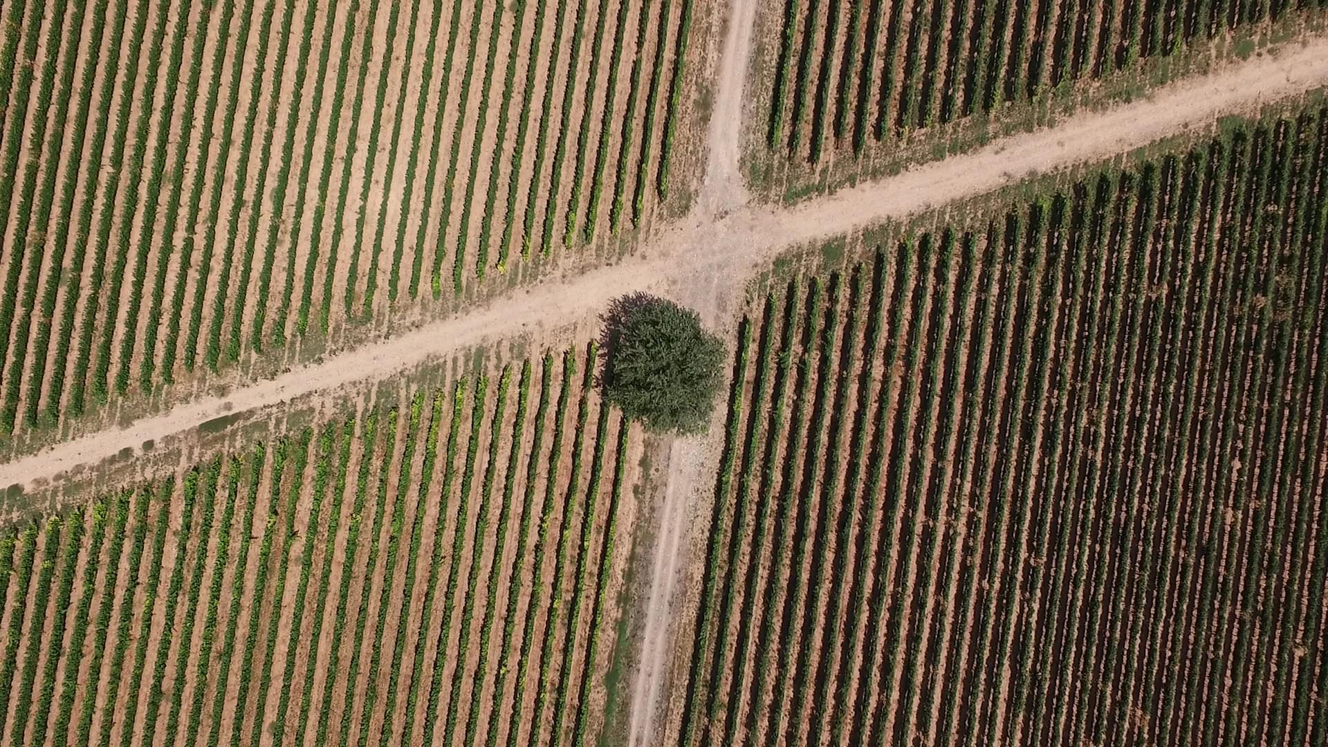 Rioja Vega en los medio marzo 2020